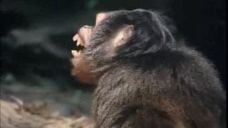 Tego nie zobaczyćie w kasycznym filmie Tarzan