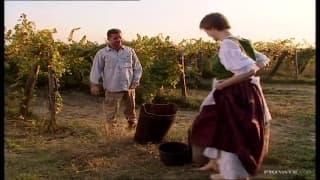 Tak Jane Darling wyciskała sok z winogron